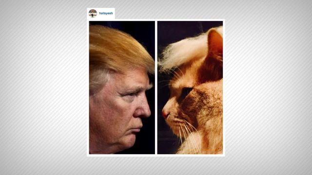 CNE Video | Trump Cats