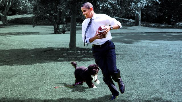 CNE Video | 22 Adorable White House Pets