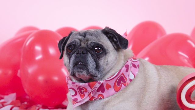 CNE Video | These Dogs' Valentine's Day Costumes Are Some of the Cutest Ever