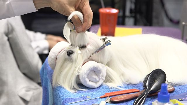 CNE Video | The Inner Monologues of Show Dogs