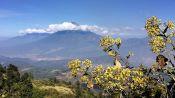 Third Place: Guatemalan Beauty