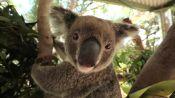 Australian Animals We Love: The Roundup