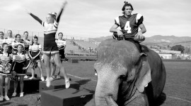 Tai the Elephant in the 2013 Hollywood Portfolio