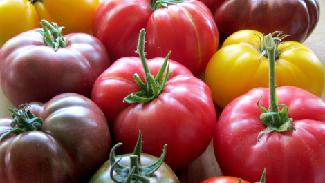 Food Snob: A Primer on Heirloom Tomatoes