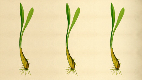Food Snob: Wild Leeks, Spring Onions, and Ramps—The Definitive Spring Vegetable