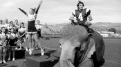 Tai the Elephant in the 2013 Hollywood Portfolio