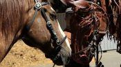 Meet the Puppet Masters Behind War Horse