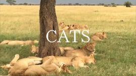African Safari: Big Cats