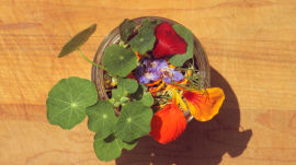 How to Make an Edible Flowerpot