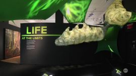 "Ars visits the AMNH ""Life at the Limits"" Exhibit"