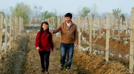 What Will China's Wine Production Look Like in 30 Years?