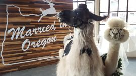 Wedding Llamas Are The Best New Reception Trend