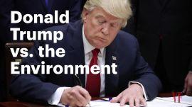 Donald Trump vs. the Environment