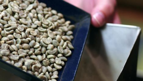 Gevalia: Selecting the Finest Coffee Beans