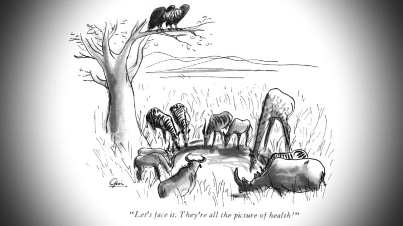 Watch The Cartoon Lounge Animal People The New Yorker