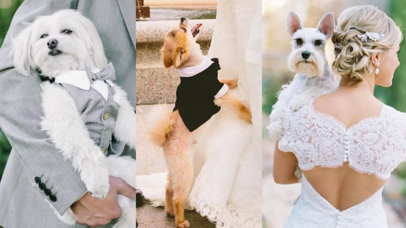 Watch Pets In Weddings The Most Epic Displays Of Puppy