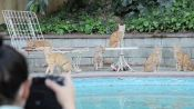Behind the Scenes: Cats by the Pool