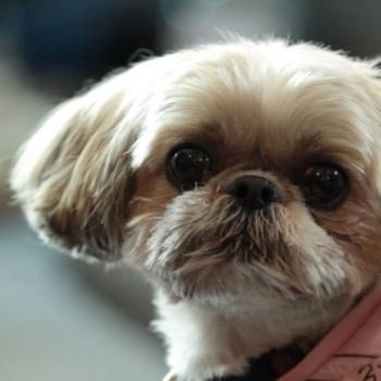 Glam Animals: Kerry Washington Introduces Us to her Totally Adorbs Dog