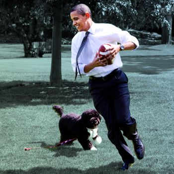 22 Adorable White House Pets