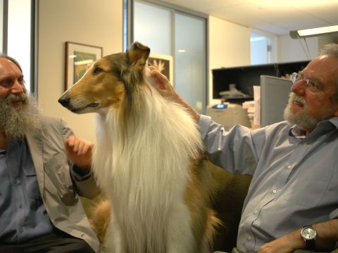 Lassie, Come to the Office