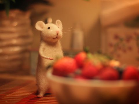 A Mouse Problem
