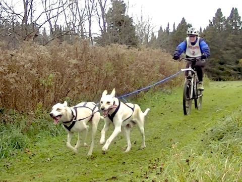 Sled-Dog Racers Trade Skis for Wheels