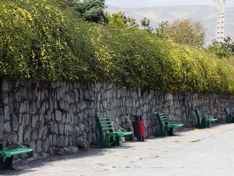 The Streets of Tehran Under Quarantine