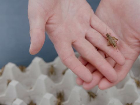 Why You Should Add Crickets to Your Diet