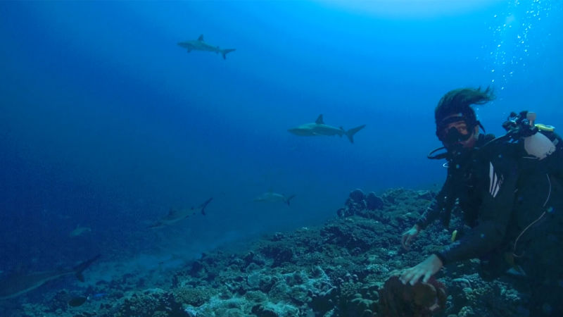 Close Encounter: Diving With Sharks