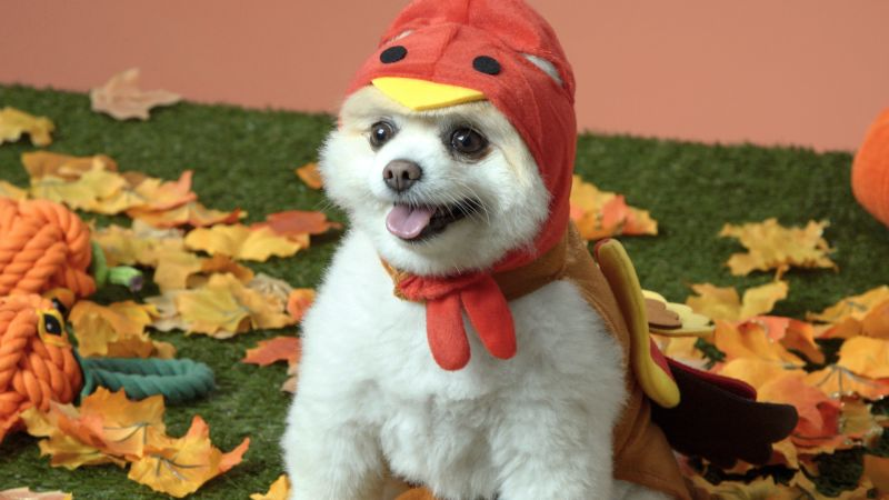 These Dogs' Thanksgiving Costumes Are Some of the Cutest Ever