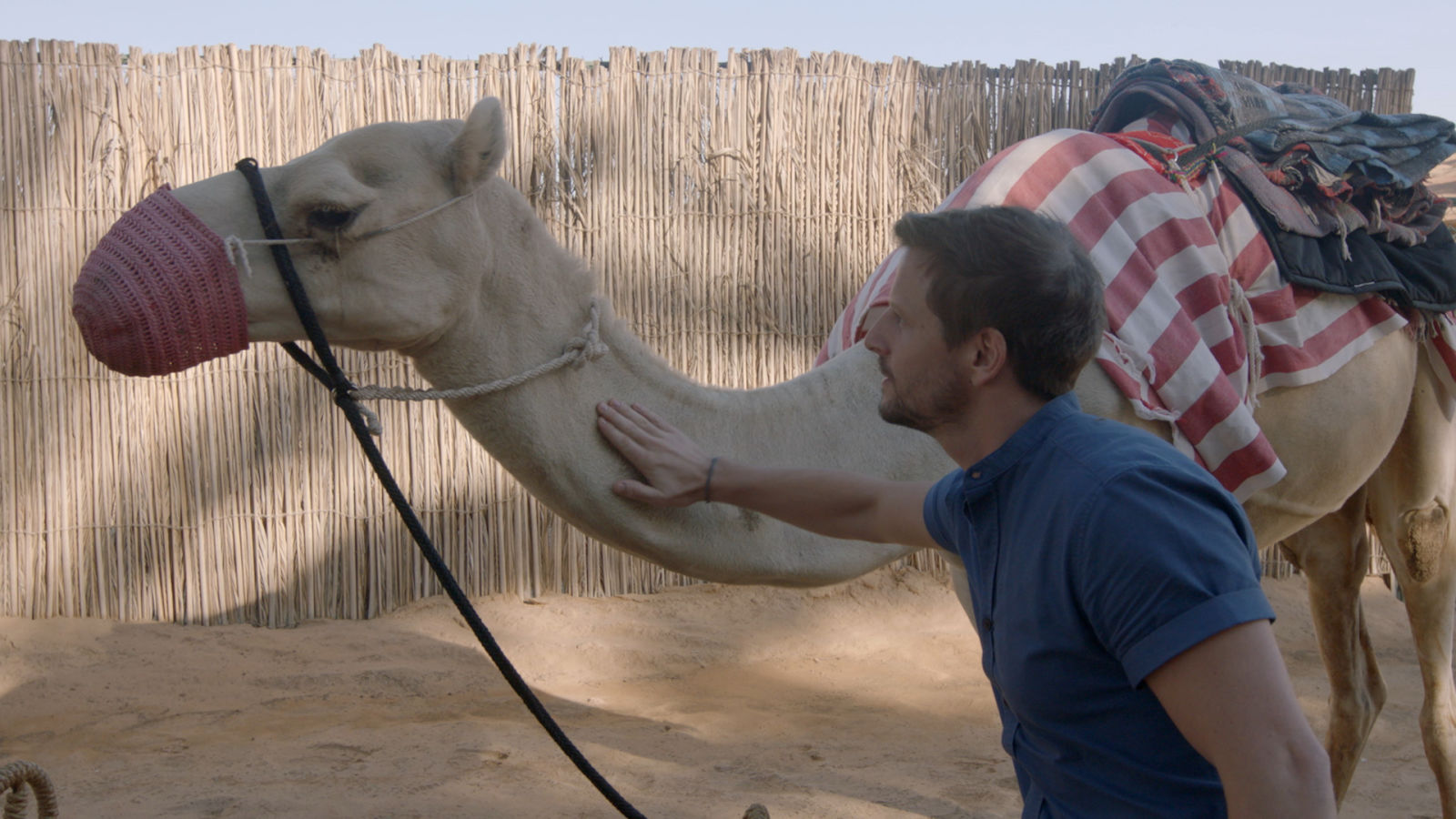 Watch the Sunset on the Back of a Camel at Dubai's Al Maha Resort