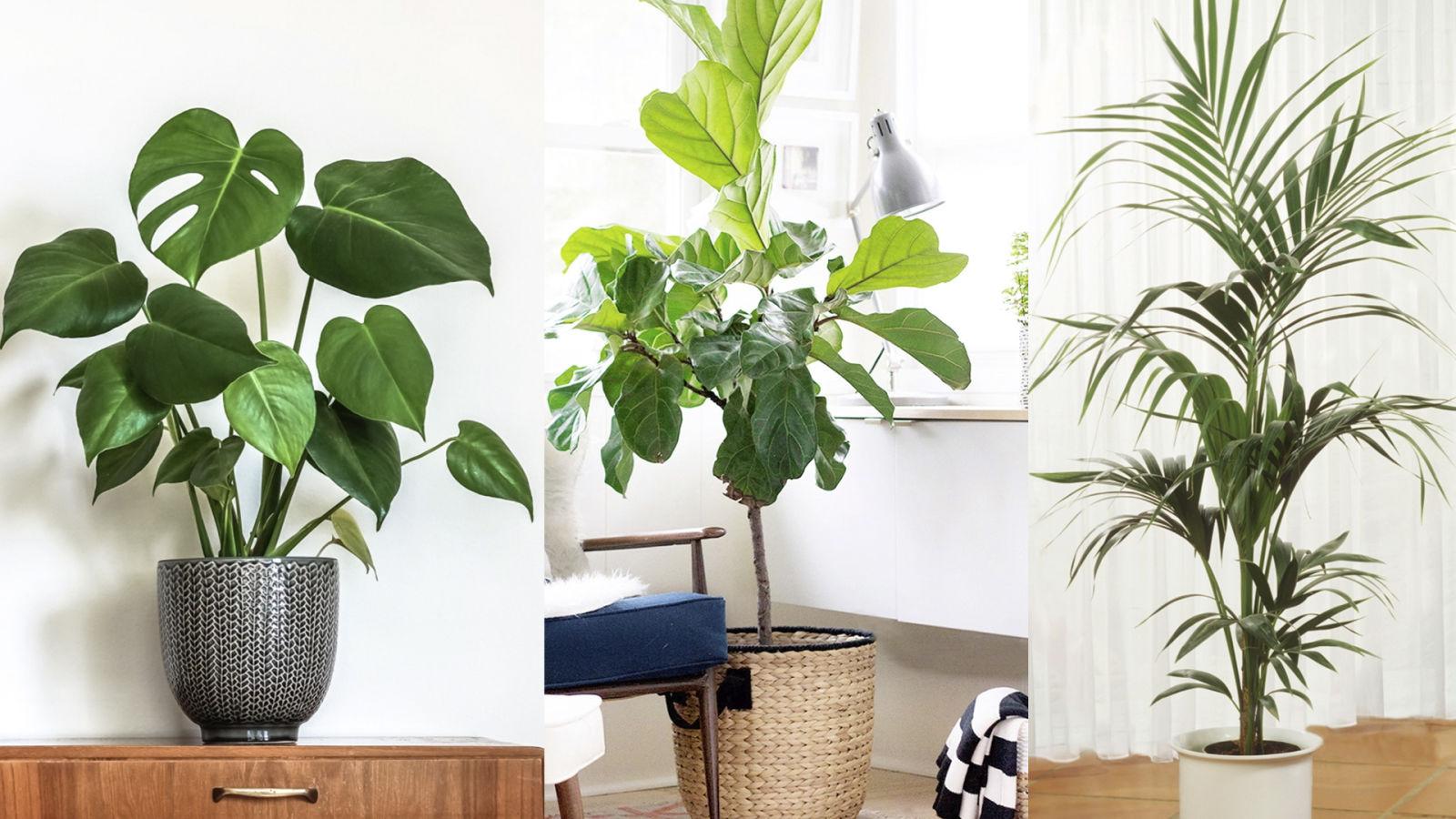 Plantas de interior que sobrevivirán