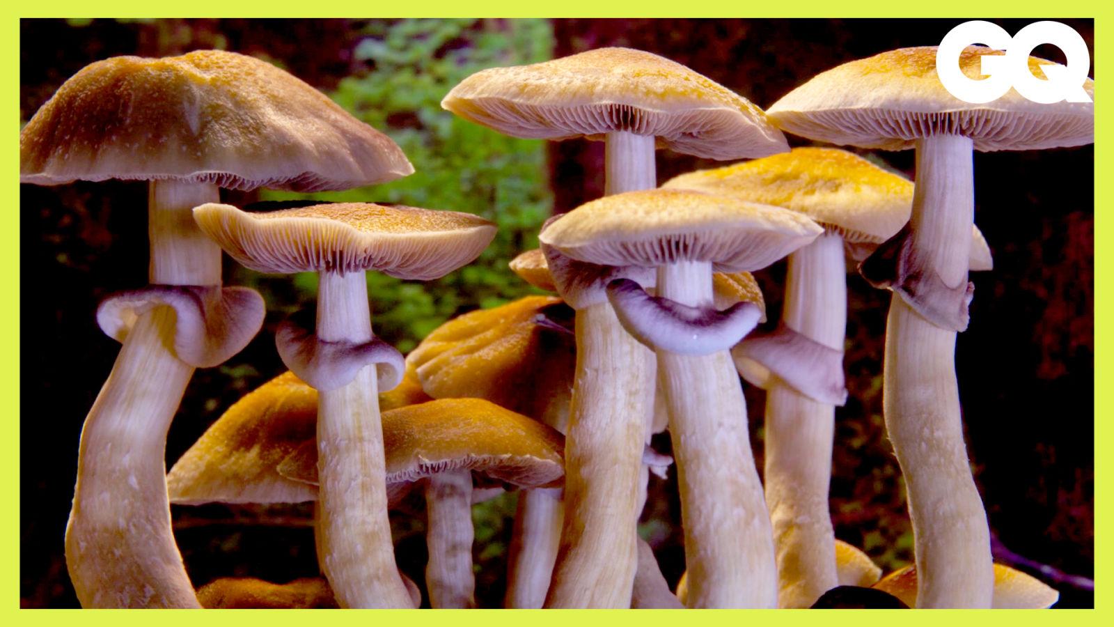 Netflix推蕈菇縮時影片看點在哪?療癒片《美妙蕈菇》製作團隊揭秘 How Mushroom Time-Lapses Are Filmed|科普長知識|GQ Taiwan