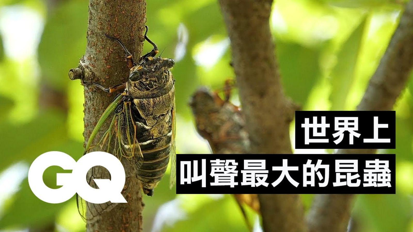 蟬的數量跟國債一樣多?17年蟬的生命週期,雄蟬雌蟬叫聲不一樣! Bug Expert Explains Why Cicadas Are So Loud|科普長知識|GQ Taiwan