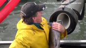 Scientist Explains Viral Fish Cannon Video