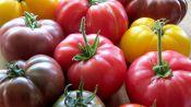 Food Snob: A Primer on Heirloom Tomatoes