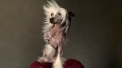 Best in Show: Backstage Beauty with the Dogs of Westminster