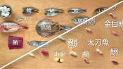 How to Make 12 Types of Sushi with 11 Different Fish