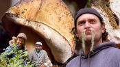 Brad Forages for Porcini Mushrooms