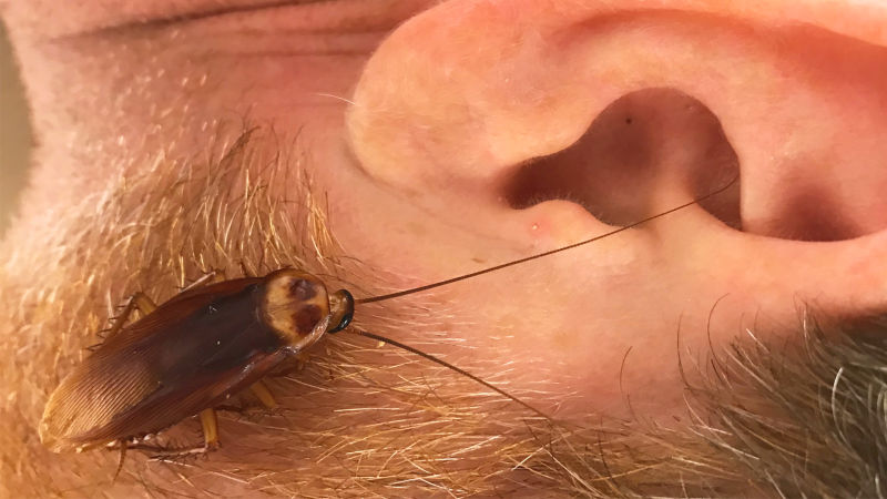 How Common Is It Actually For a Bug to Crawl in Your Ear? | SELF