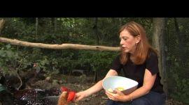 Visiting Susan Orlean's Chicken Coop