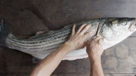 Breaking Down a Striped Bass at Beach Plum Restaurant
