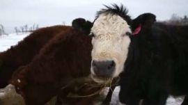 Kinderhook Farm: Restaurateur Andrew Tarlow's Main Livestock Provider