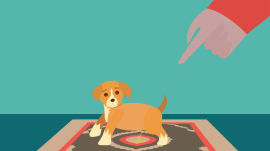 How to Housetrain a Puppy (Have You Considered Boarding School?)