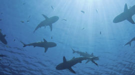 Using Shark Skin to Fight Against Bacteria
