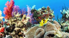 How Coral Reefs and Carbon Dioxide Can Change the Future