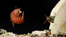 Mantis Shrimp Fight Club