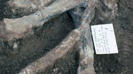 Incredible discovery places humans in California 130,000 years ago