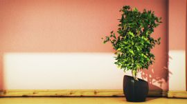 How To Liven Up Your Boring Ficus Plant