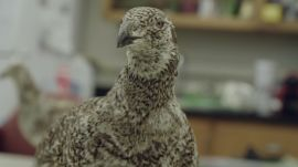 The Taxidermy Bird That Scientists Turned Into a Robot
